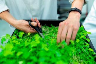 Economía verde, una alternativa ante un sistema fallido