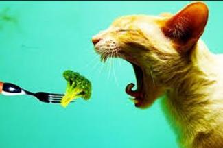 Cuidado con la dieta vegana para los gatos, puede causarles insuficiencia cardiaca